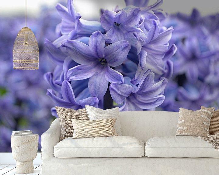 Sfeerimpressie behang: Hyacint in de Bollenstreek/Nederland van JTravel