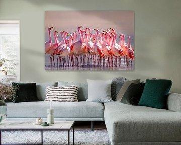 Dresscode: roze van Pieter Elshout