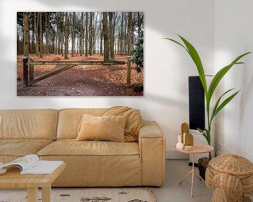Urnenveld in het Evertsbos in Drenthe