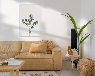 Eucalyptus takken | Botanische foto | Plant | Groen | Bladeren | Minimalistisch van Mirjam Broekhof