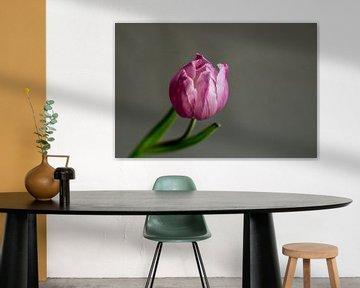 Tulpe von Ellen Snoek