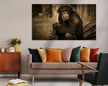 Chimpansee Lana van Irma Heisterkamp