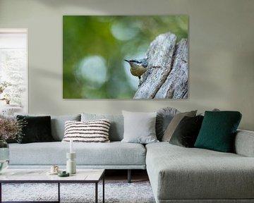 Oplettende boomklever met zachte bokeh