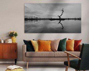 Schwarzweiß Spiegelung im See von Awid Safaei