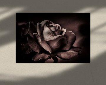 Roos von Rob Boon