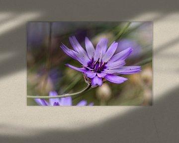 Blaue Blume von Rob Boon