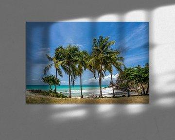 Le Gosier, Guadeloupe, Frankrijk van Peter Schickert