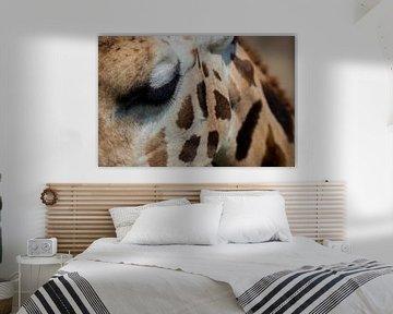Das Auge der Giraffe von Loes Fotografie