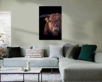 Portret van een Schotse Hooglander van 7.2 Photography