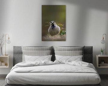Un moineau pour faire son nid sur Patrick van Os