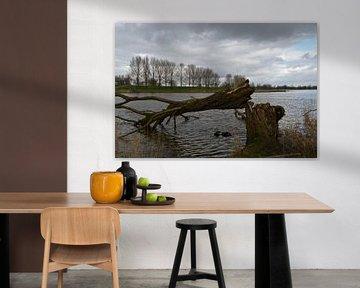 Omgeknakte boom van FotoGraaG Hanneke