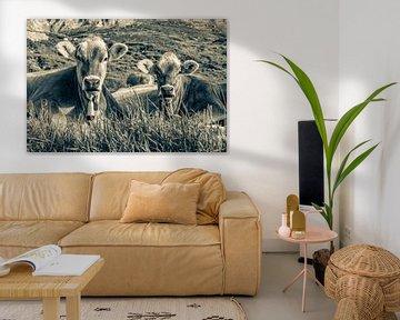 Kühe auf der Weide in den Schweizer Alpen - Monochrom von Werner Dieterich