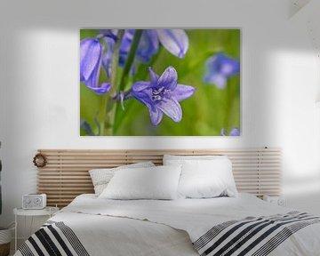 Hyacinth van Kristof Lauwers