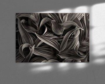 Blätter Schwarzweiss von Denis Feiner