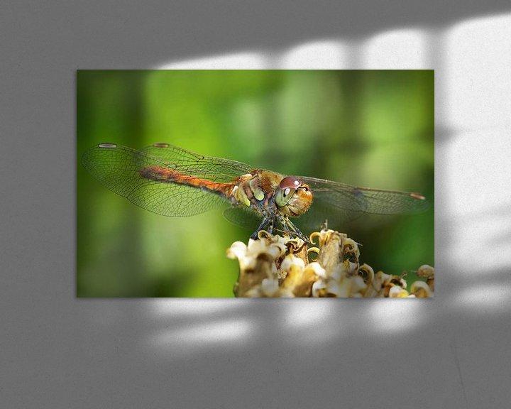 Sfeerimpressie: Dragonfly van Frank Herrmann