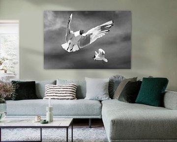 Fliegende Möwen von Frank Herrmann