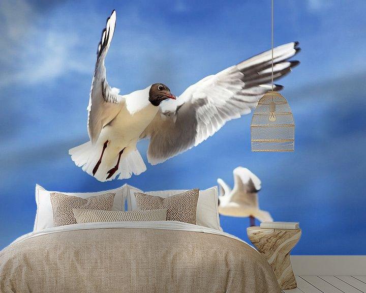Beispiel fototapete: Fliegende Möwen von Frank Herrmann