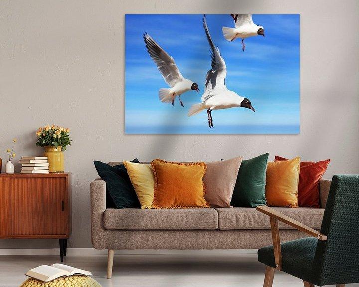 Beispiel: Fliegende Möwen von Frank Herrmann