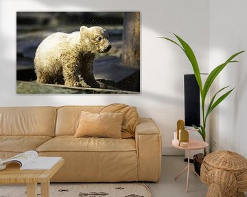 Kleiner Eisbär schüttelt sich den Dreck aus dem Fell