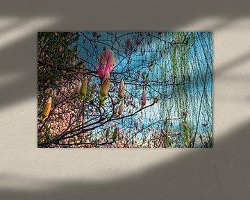 Blühende Magnolien im Frühling von Chihong