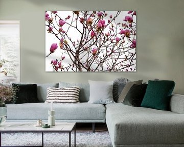 Magnolienblüten im Frühling von Chihong