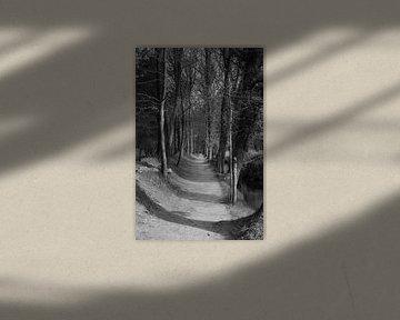 Een laan op een landgoed langs een beek van Gerard de Zwaan