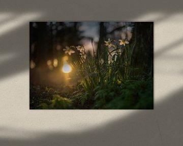 Blumen Teil 102 von Tania Perneel