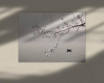 Winter Lake von Lena Weisbek