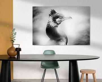 Porträt eines Kormorans (Nahaufnahme, schwarz-weiß) von Fotografie Jeronimo