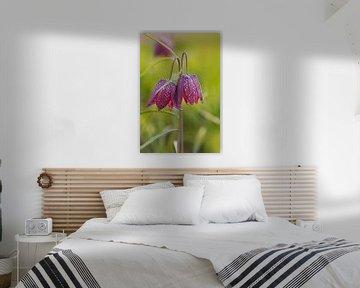 Wilde Kievitsbloem, Fritillaria meleagris van Adelheid Smitt