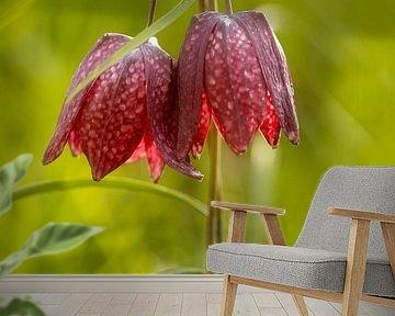 De Wilde Kievitsbloem, Fritillaria meleagris van Adelheid Smitt