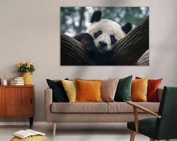 Pandabär von Chihong