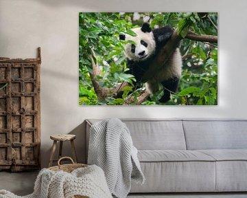 Pandabär im Baum von Chihong
