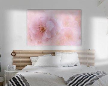 Blüte von Truus Nijland