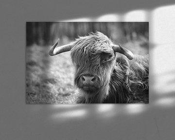 Schottischer Highlander von Eva De Mol