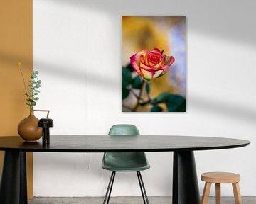 Rose von Jan Fritz