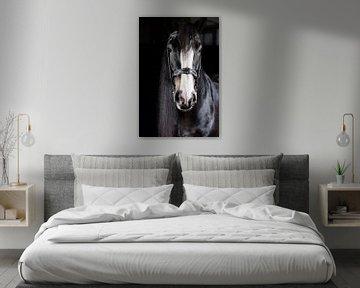 Portrait d'un cheval shire sur Annet van Esch