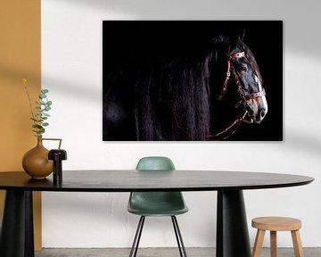 Portrait d'un cheval de race Shire sur Annet van Esch