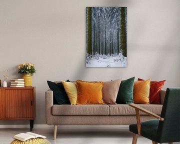 Winter-Comeback von Wim van D