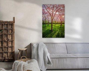 Blossom Park mit Frühlingssonne von Robin Scholte