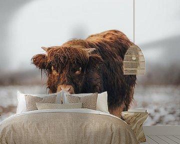 Schotse Hooglander kalf in de Winter van Lotte van Alderen
