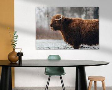 Schotse Hooglander portret in de Winter van Lotte van Alderen