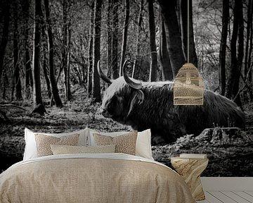 Schotse Hooglander   Rustend in een natuurgebied van Ricardo Bouman