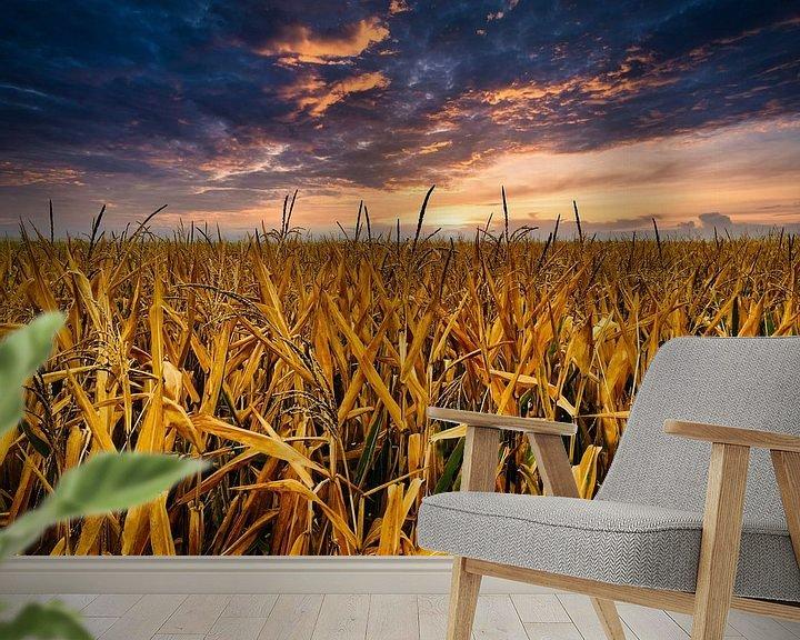 Beispiel fototapete: Abendstimmung im Kornfeld von Dusan Pintner