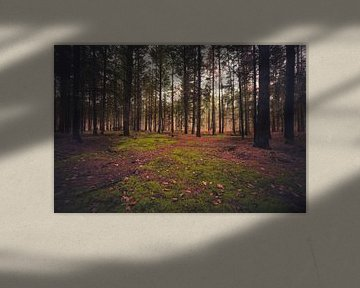 clairière dans les bois sur Skyze Photography by André Stein