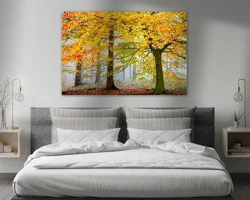 Una Foresta Particulare van Lars van de Goor
