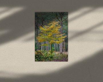 Gouden boom in het bos van Patrick van Os