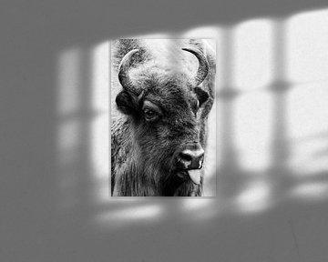 Lustiges Porträt eines stämmigen Wisents, Europäischer Bison von Robin Scholte