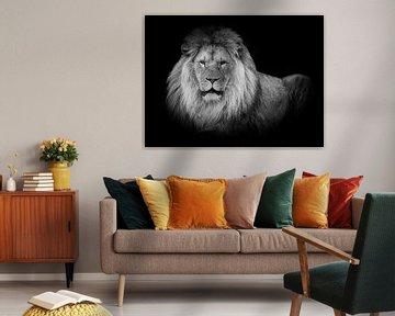Löwen: liegender Löwe in Schwarz und Weiß von Marjolein van Middelkoop