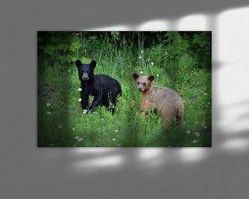 Bären in Kanada von Tony Van de Velde